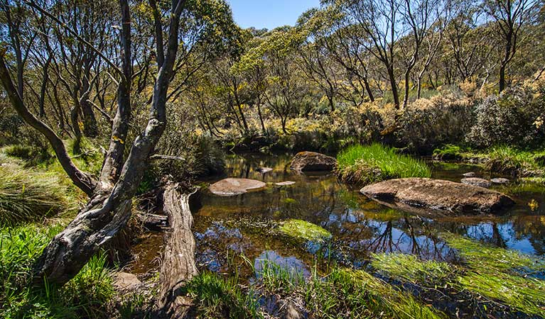 Junction Pools campground - Accommodation Newcastle