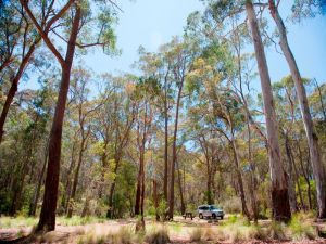 Coolah Tops National Park Camping - Accommodation Newcastle