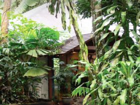 Heritage Lodge and Spa - In the Daintree - Accommodation Newcastle