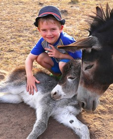 Destiny Boonah ECO Cottages and Donkey Farm - Accommodation Newcastle