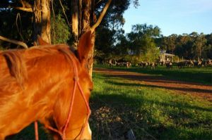 Billa Billa Farm Cottages - Accommodation Newcastle