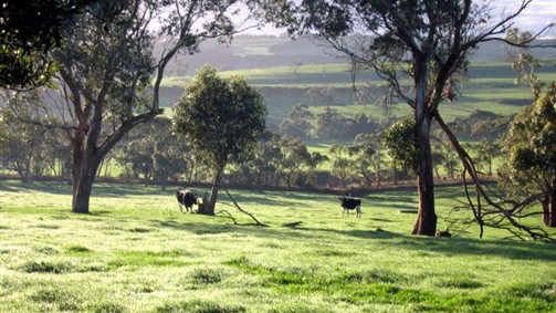 Bellevue Farmstay - Accommodation Newcastle