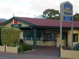 Best Western Melaleuca Apartments - Accommodation Newcastle