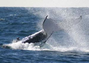 Whale Watching Sydney - Accommodation Newcastle