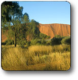 Uluru - Kata Tjuta National Park - Accommodation Newcastle