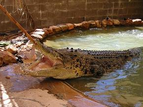 Wyndham Zoological Gardens and Crocodile Park - Accommodation Newcastle