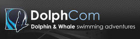 Dolphcom - Dolphin  Whale Swimming Adventures - Accommodation Newcastle
