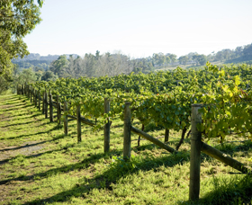 Surveyor's Hill Vineyards - Accommodation Newcastle