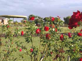 Elizabeth Park Rose Gardens - Accommodation Newcastle