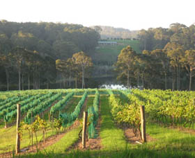 Tilba Valley Wines - Accommodation Newcastle