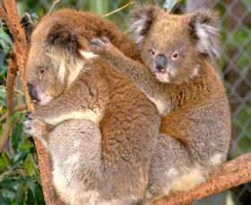 Shoalhaven Zoo - Accommodation Newcastle