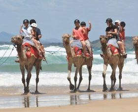 Camel Rides with Coffs Coast Camels - Accommodation Newcastle