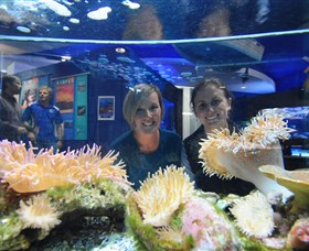 Solitary Islands Aquarium - Accommodation Newcastle
