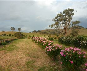Damasque Rose Oil Farm - Accommodation Newcastle