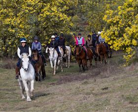 Burnelee Excursions on Horseback - Accommodation Newcastle