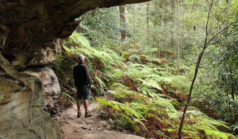 Dharug National Park - Accommodation Newcastle
