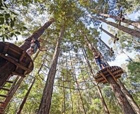 TreeTop Adventure Park Central Coast - Accommodation Newcastle