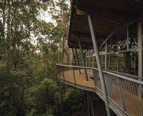 Tarkine Forest Adventures - Dismal Swamp - Accommodation Newcastle