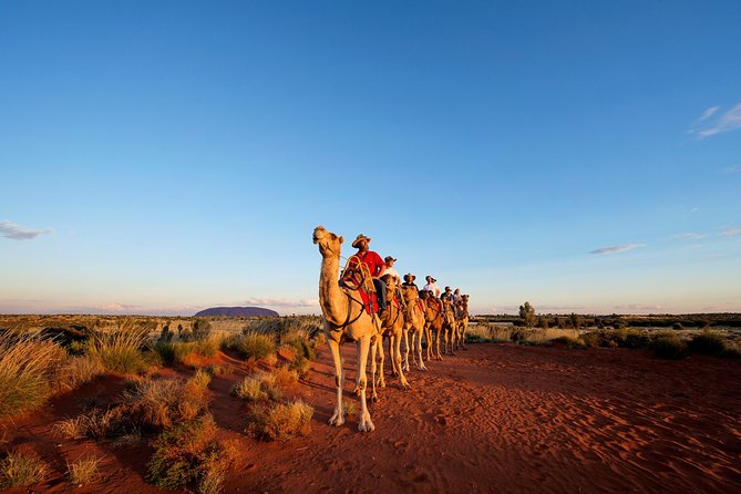 Uluru Camel Express Sunrise or Sunset Tours - Accommodation Newcastle