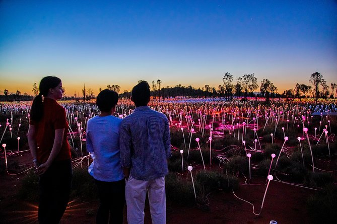 Uluru Field of Light Sunrise Tour - Accommodation Newcastle