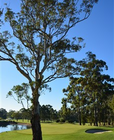 Ryde-Parramatta Golf Club - Accommodation Newcastle