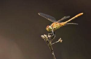 Dragonfly Discovery - Accommodation Newcastle