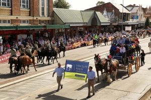 Scone Horse Festival - Accommodation Newcastle