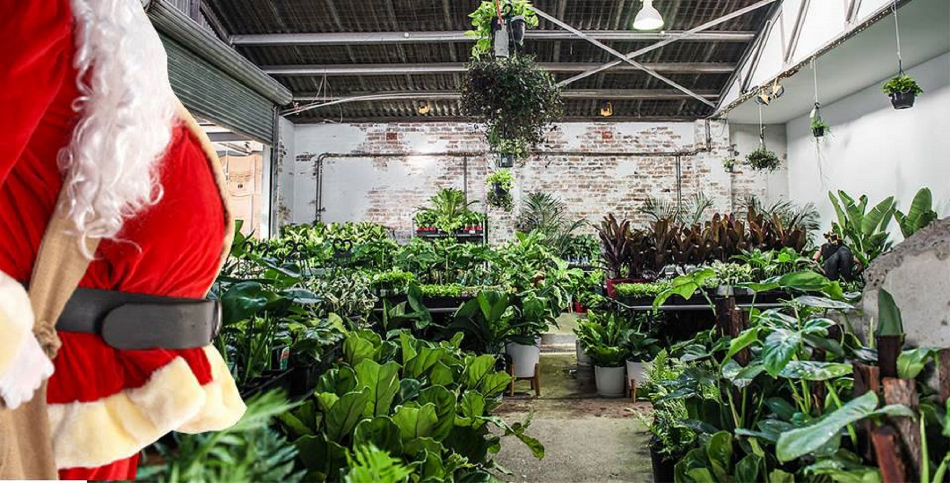 Newcastle - Huge Indoor Plant Warehouse Sale - Christmas Bonanza - Accommodation Newcastle