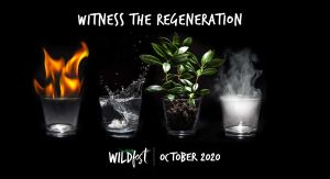 Wildfest - Annual Festival - Accommodation Newcastle